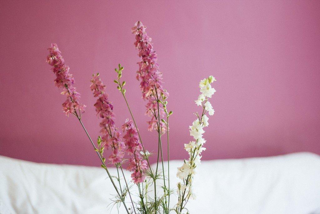 pink white flower2